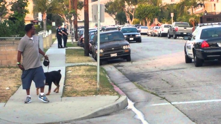 Hawthorne, California Police Arrest A Man For 'Obstructing An Investigation' And Shoot His Dog