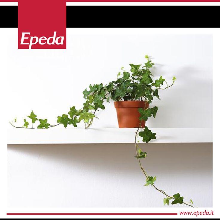8 migliori immagini 6 piante da mettere in camera da letto per dormire meglio su pinterest - Piante per camera da letto ...