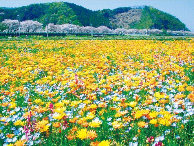 春の伊豆と言えば、絶景花畑に梅まつりに! ということで、気になる伊豆エリアの花情報と、この時期おすすめの周辺スポット情報を厳選してご紹介します! まるで絵本の様にメルヘンな美しい花畑の絶景コントラストに、ライトアップなど、一度は訪れてみたい名所やグルメが続々登場。 春の伊豆で、旬のお出かけを満喫してみてはいかがでしょう?
