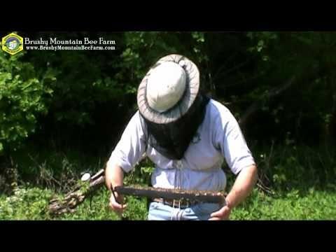 Brushy Mountain Bee Farm: Installing Your NUC