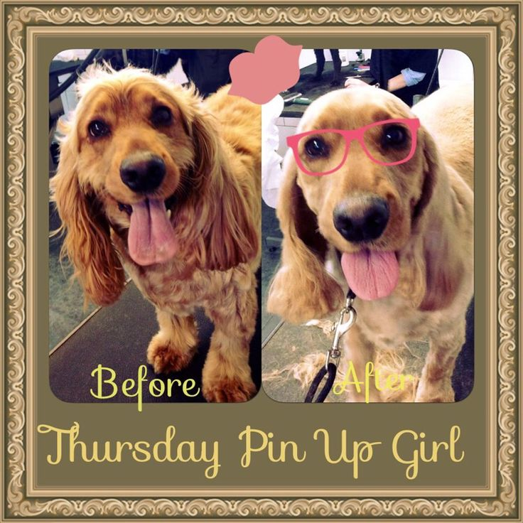 DeeDee our April weekly pin up girl! She's a 3 year old Spaniel! Boys, now stop the wolf whistling xo