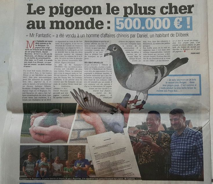 MR. FANTASTIC NOW THE MOST EXPENSIVE PIGEON IN THE WORLD – Pigeon Radio Audio Archives