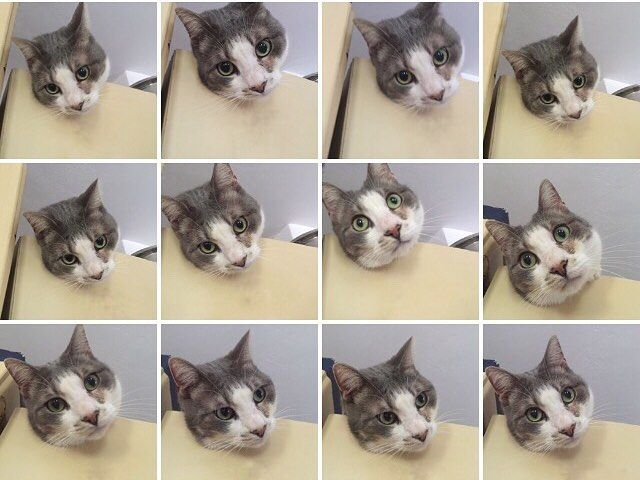 #instagramers #instagood #instamood #webstagram #iphoneography #iphonesia #iphoneonly #iphoneology #igsg #statigram #iphonology #catlover #prettycat #pets #instakitty #instapet #猫 #貓 #고양이 #кошка #قط #ח #חתול #ಬಕಕ #мачка #แมว #cat #kedi #kočka #बलल by ideastudios