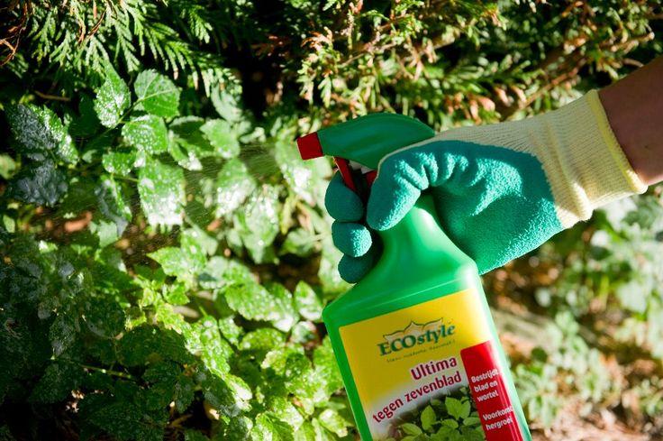 BUITENLEVEN   Hoe krijg je zevenblad uit je tuin? - Wonen&Co
