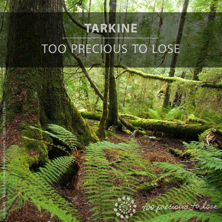 Tarkine
