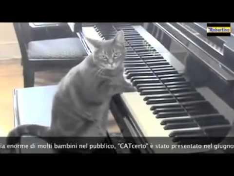 Concerto per piano e orchestra (gatto solista) ITA