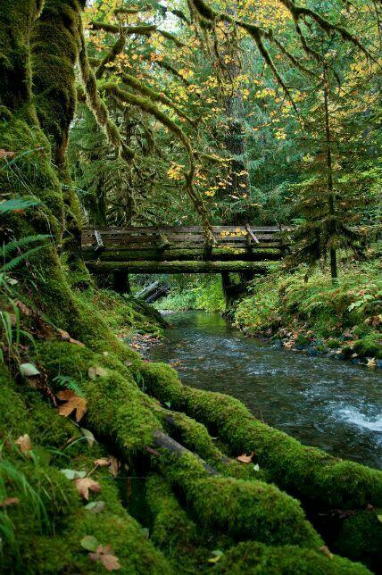 Olympic national park, Washington USA