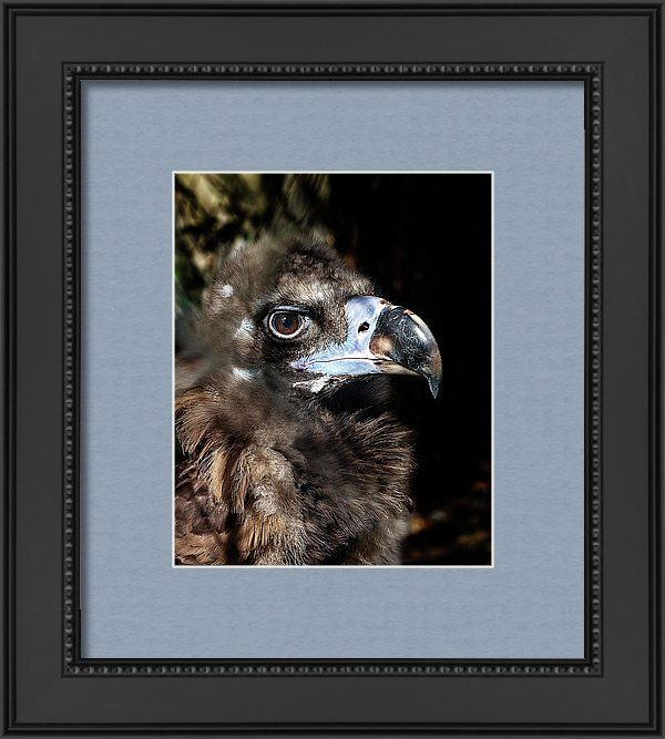 Well Framed Print featuring the photograph Well, A Very Serious Look by Irina Safonova