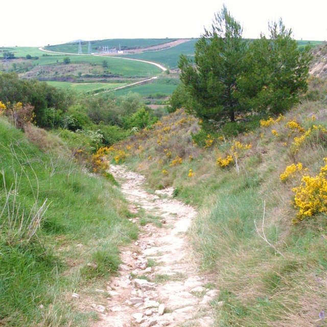 I will walk the Camino de Santiago!