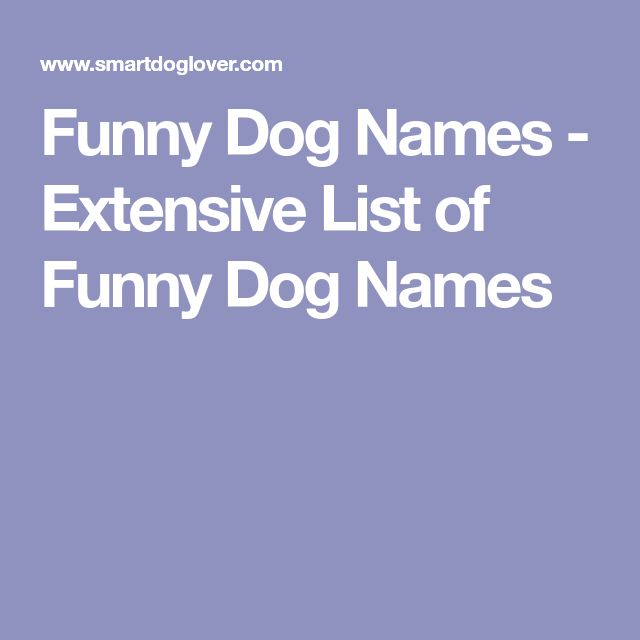Funny Dog Names - Extensive List of Funny Dog Names