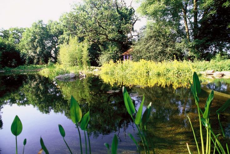 Natural Pools & Natural Ponds by gartenART-Australia - Pond_Hertfordshire_6.jpg
