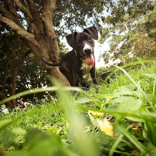 Ready for playtime at Doggie Days Dog Park - Crest Lake Park - Clearwater, FL - Angus Off-Leash #dogs #puppies #cutedogs #dogparks #angusoffleash #clearwater #florida: