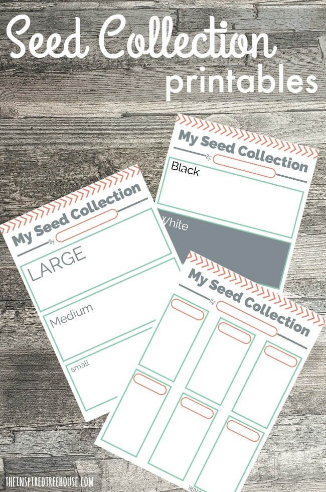 Printable Activities for Kids Seed Collections 25