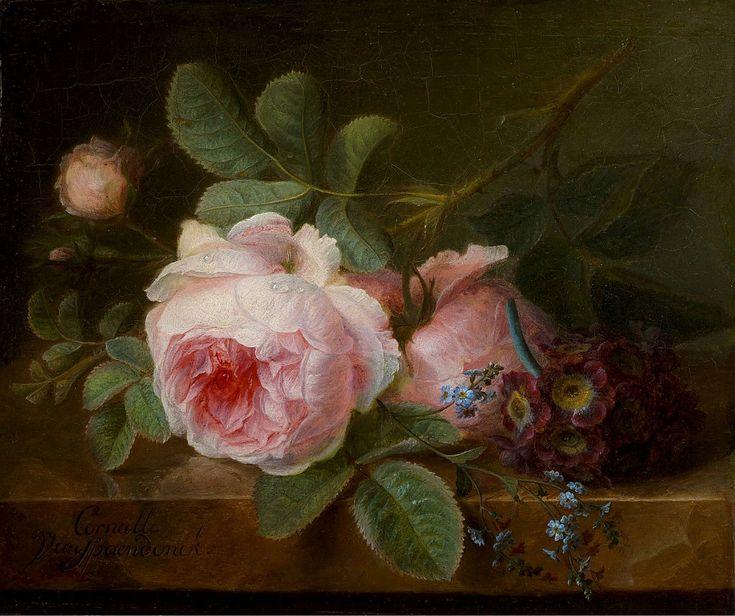 Cornelis van Spaendonck and Cabbage Rose, Dutch Painter 1756-1839