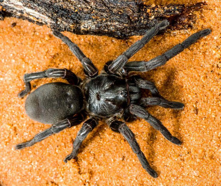Die besten 25+ Ameisen Ideen auf Pinterest Ameisen, Insekten und - was hilft gegen ameisen in der küche