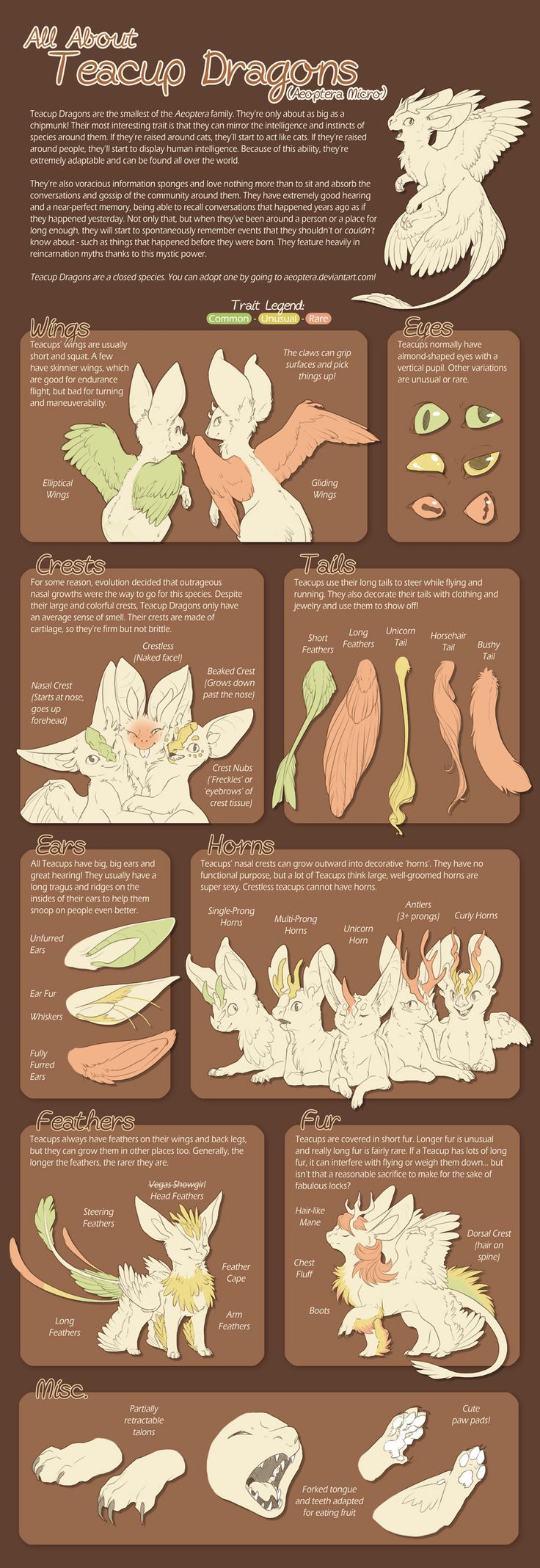 Teacup Dragon Species Sheet v.2 by Aeoptera.deviantart.com on @DeviantArt