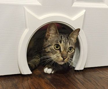 Interior cat door! (Click for price)