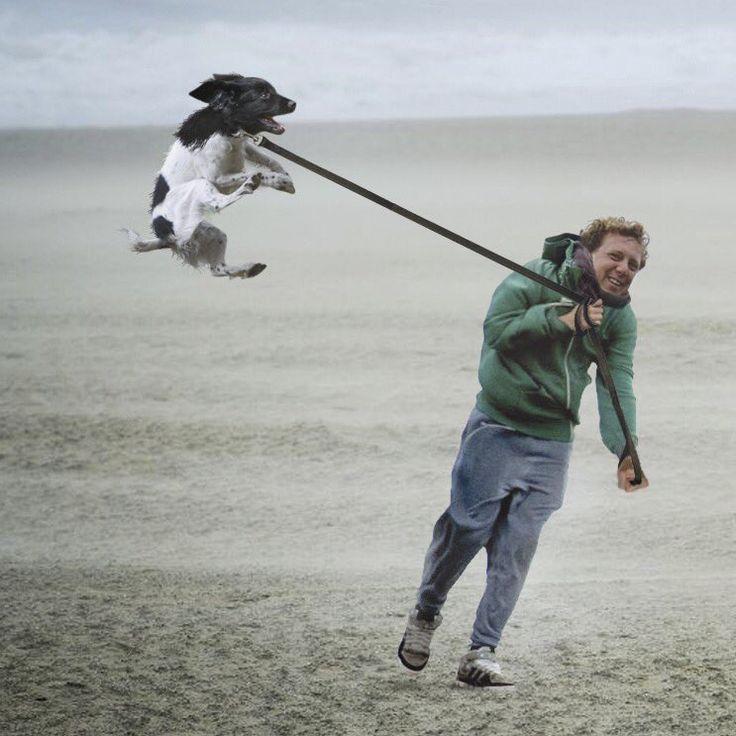 Lekker vliegeren met de hond op eerste kerstdag in Katwijk! Fijne kerstdagen allemaal!  ❤Jochem Myjer (@jochemmyjer) | Twitter
