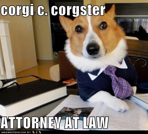 :): Dogs Mems, Funny Dogs, Lawyer Dogs, Dogs Memes, Lawyer Humor, Dogs Funny, Law Schools, Legally Humor, Animal Memes