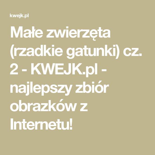 Małe zwierzęta (rzadkie gatunki) cz. 2 - KWEJK.pl - najlepszy zbiór obrazków z Internetu!