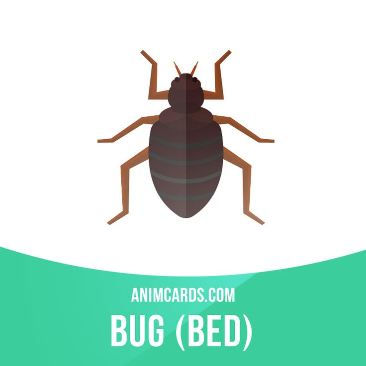 As a survival instinct, bed bugs are elusive. They know to stay out of view during the daytime, hiding in mattress crevices, box springs, baseboards, behind electrical switchplates, in picture frames, and even behind wallpaper. But at nighttime, the carbon dioxide we exhale often tempts them out of their hiding spots. Learning English can be fun! Visit our website: learzing.com #english #englishlanguage #learnenglish #studyenglish #language #vocabulary #dictionary #englishlearning #vocab