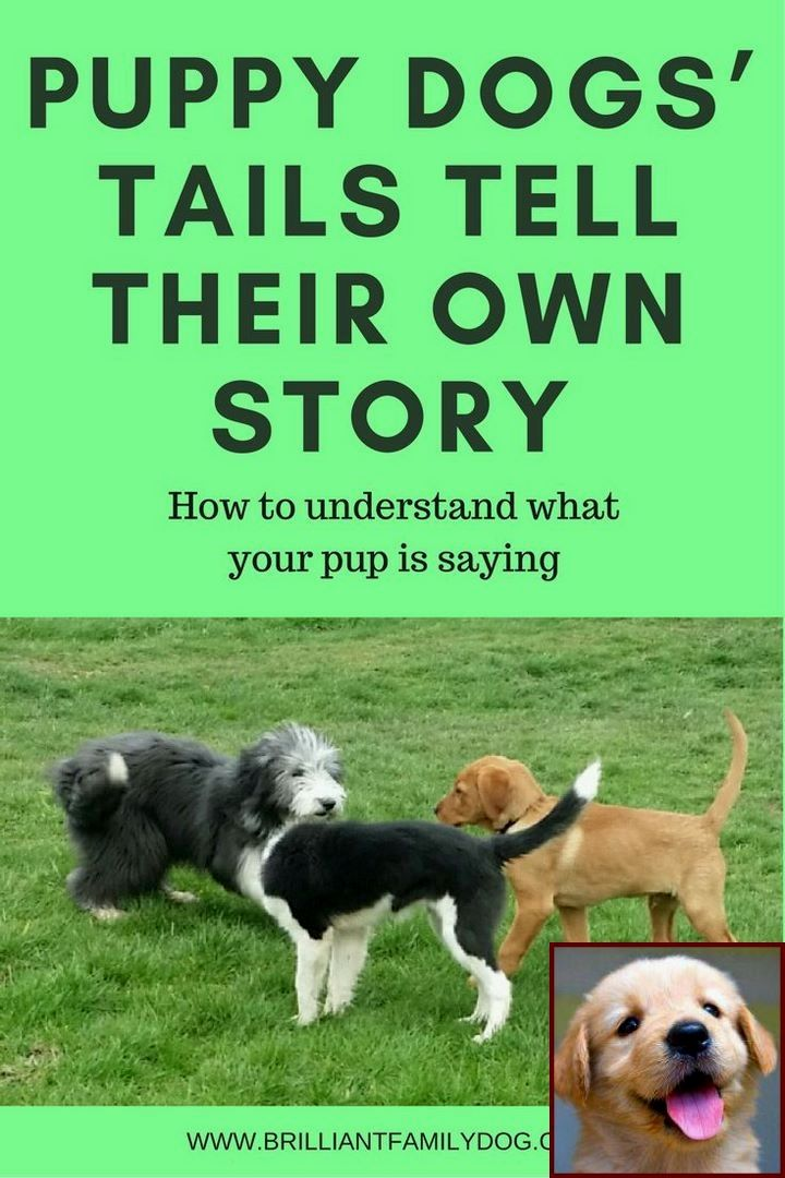 1 Have Dog Behavior Problems Learn About Dog Behavior Red Zone