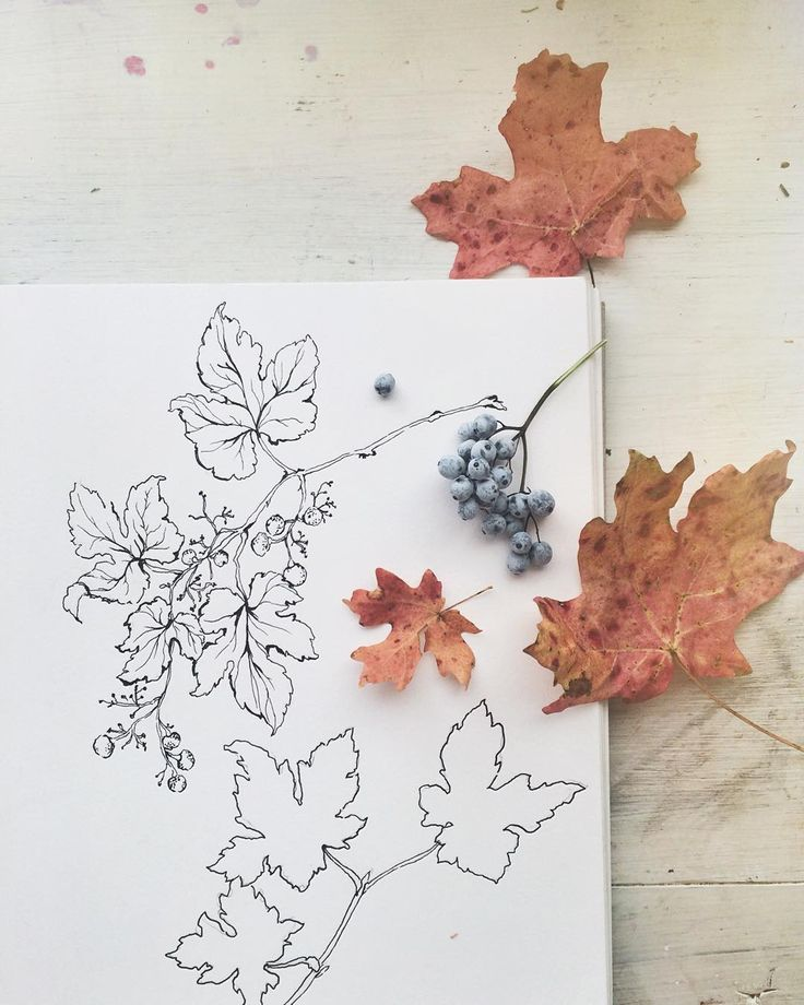 how to draw fall things