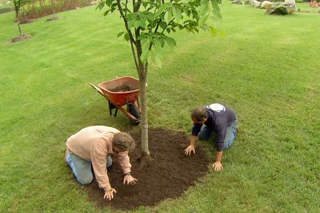 Don't suffocate trees with This Old House landscape contractor Roger Cook and certified arborist Matt Foti | thisoldhouse.com | from How to Properly Mulch Around a Tree