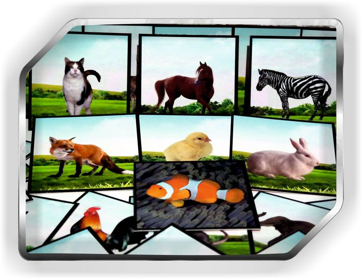 hayvan resimleri görsel kartları