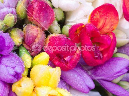 bouquet colorato fresia con gocciolina — Immagini Stock #43367615