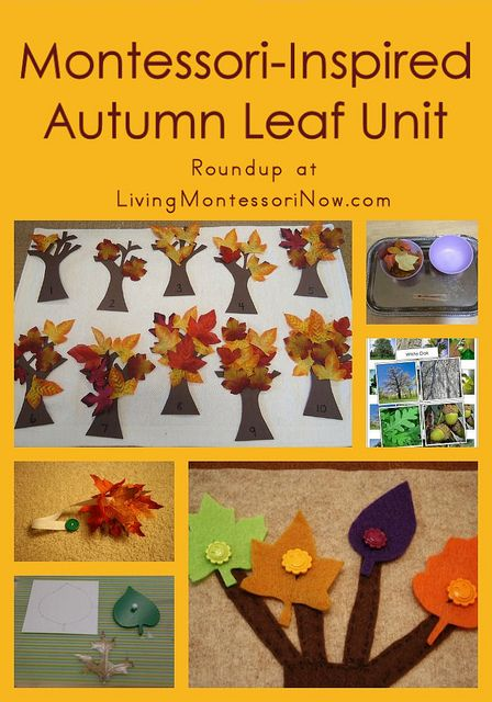 Roundup with lots of Montessori-inspired autumn leaf activities for multiple ages - for home or classroom