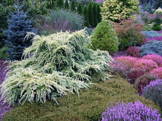 I think the white-variegated weeping tree is Deodara 'Snow Sprite' or similar cultivar.  Lots of blooming heathers in the photo too.