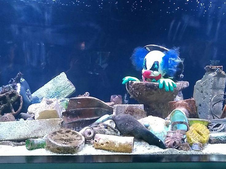 Les aquariums du monde entier s'associent contre la pollution plastique des océans. - Sciencesetavenir.fr