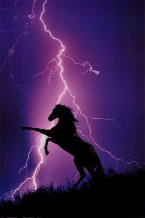 Blitz und Silhouette eines Pferdes                                                                                                                                                                                 Mehr