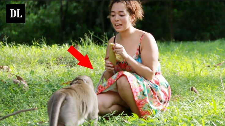 Happy Monkey Meeting With Beautiful Girl Near Bayon Temple  -  Amazing M...