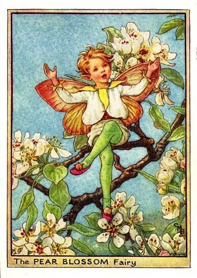 """""""The Pear Blossom Fairy"""" by Cicely Mary Barker."""