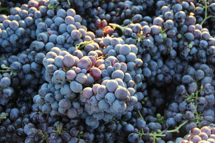 Things To Do Around Town: Foothill Grape Day 2014 on June 5th with Turley Wine Cellars!