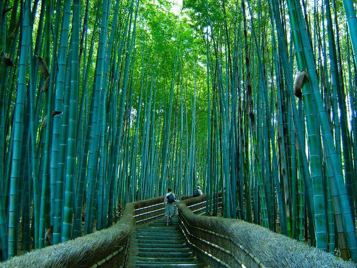 Bosque de Bambú de Kyoto, Japón   El bambú es un material extremadamente versátil, y en estado natural, una especie de singular belleza. Un pequeño bosque de bambú, muy cerca de Kyoto, en Japón, ofrece un encantador paseo a través de un sendero, brindando imágenes de sutil belleza al estilo japonés. http://blog.GustavoyEly.com