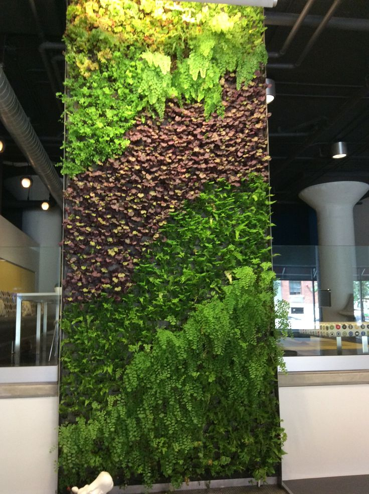 Living Wall Inside 520 Park Apartments In Historic Mount Vernon, Baltimore