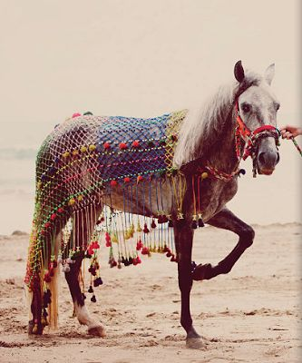 Shannon Fricke: Be Free...gypsy + boho dressed out horse on the beach + summer