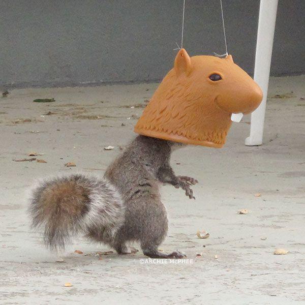 Big Head Squirrel Feeder both feeds and humiliates squirrels. (Ah, no harm, no foul.)