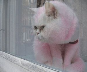 I could totally see me doing this.    Pet Grooming Designs for Fashion Stylish Dogs and Cats