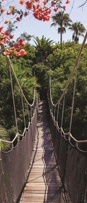 Fototapeta pionowa Consalnet 250 - Most w dżungli