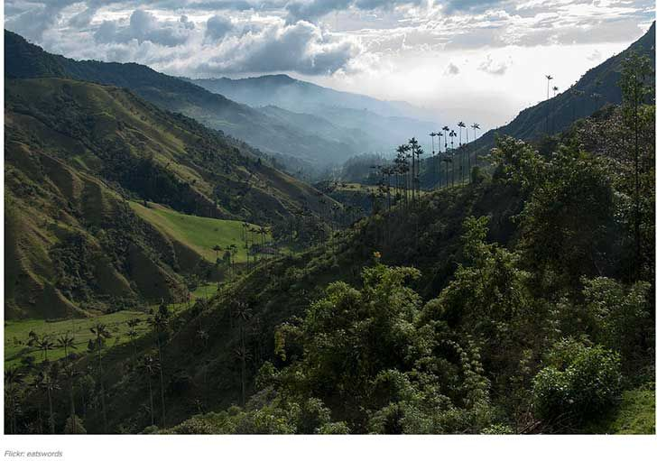 Valle Cocora, Colombia