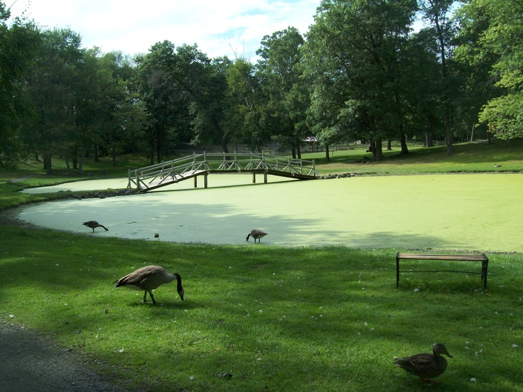 This picture was taken at Fawn-Doe-Rosa in St.Croix Falls, Wisconsin.
