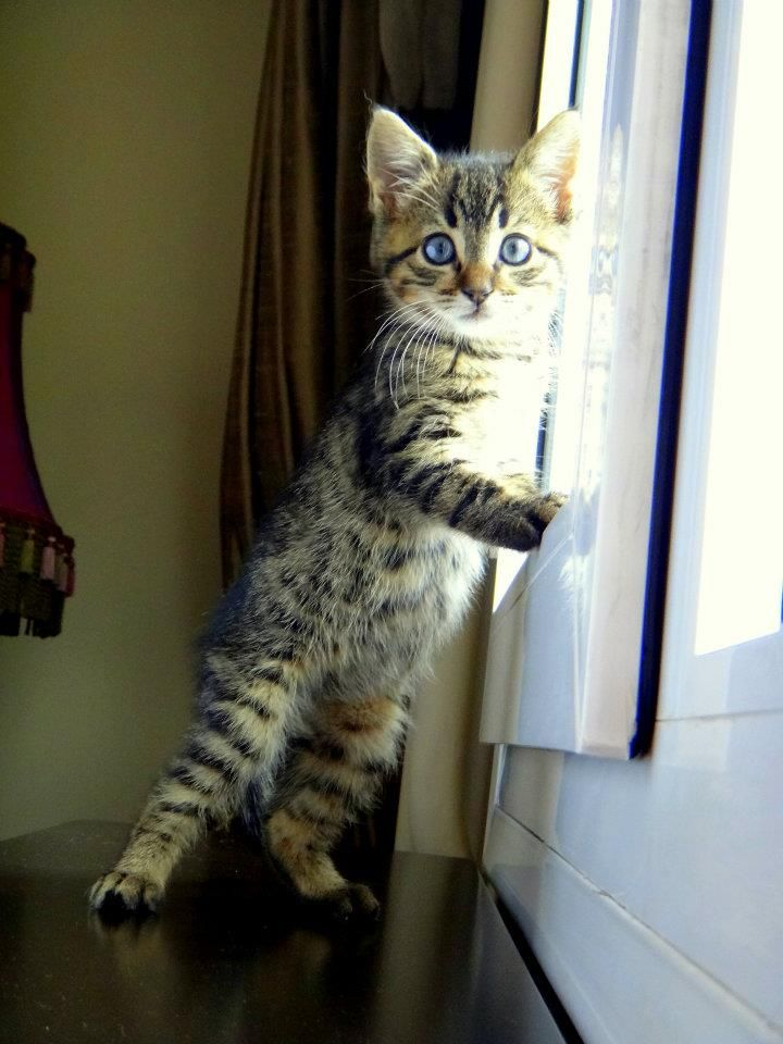 Mean Eyed Cat Tab