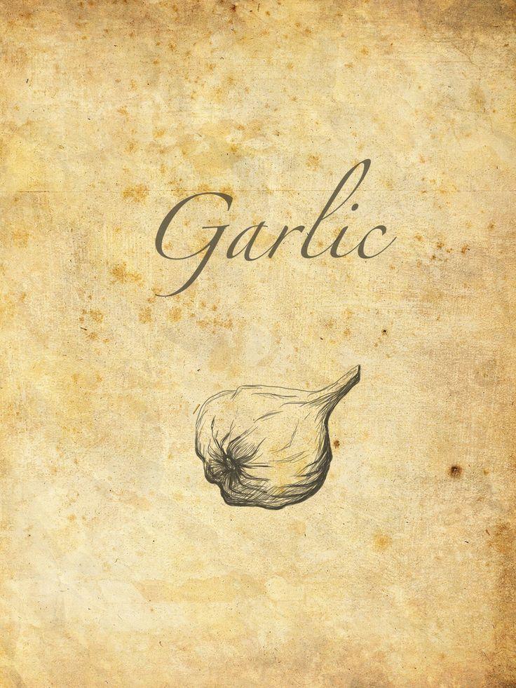 Retro garlic - sketch for kitchen