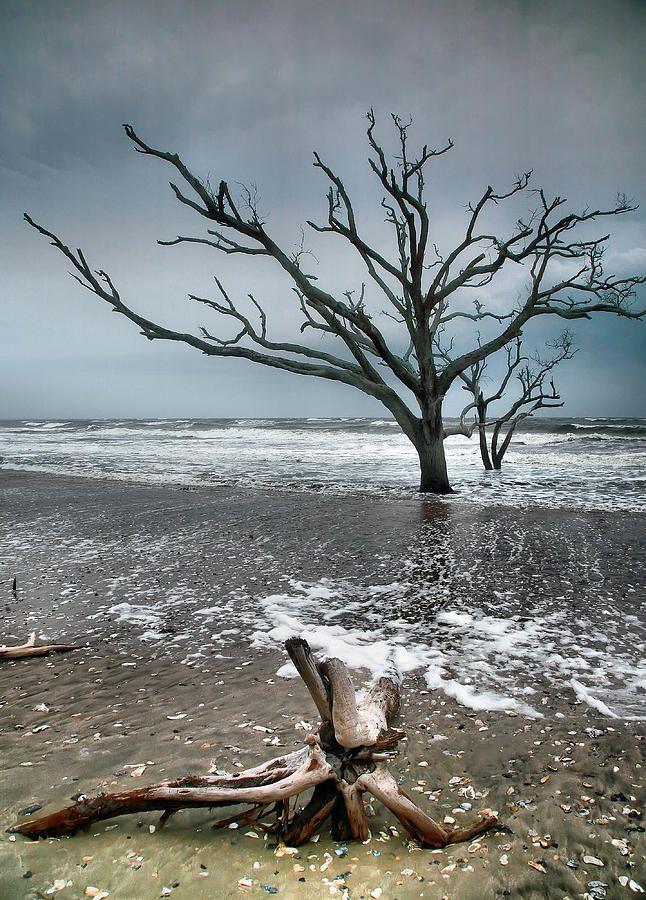 ✯ Botany Bay - Edisto Island, South Carolina