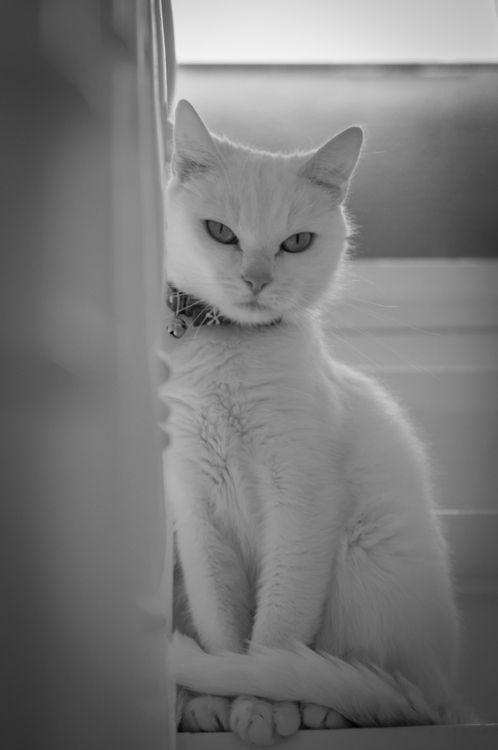 Adusta pero seductora mirada, en excelente tenida blanca impecable                                                                                                                                                                                 Más