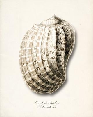 vintage sea shell...